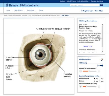 Thieme Bilddatenbank Anatomie - Thieme Connect - E-Learning