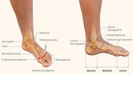 Spiraldynamik®: Anatomie des Fußes – TRIAS Verlag – Gesundheit