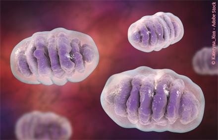 Mitochondrien und Krebs - Heilpraxis - Haug Verlag