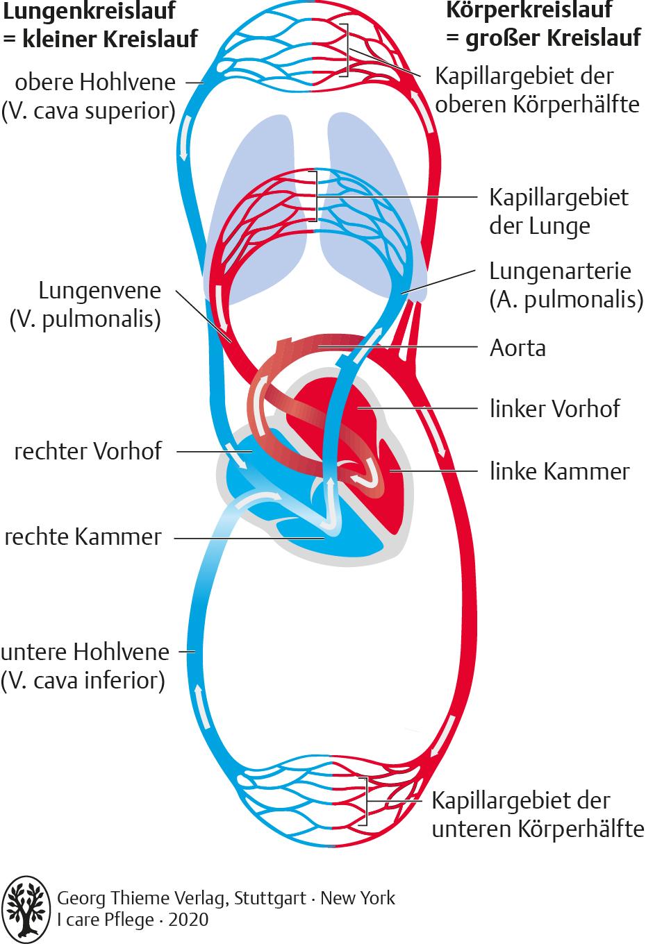 20.Kreislauf und Gefäßsystem   Pflegepädagogik   Georg Thieme Verlag
