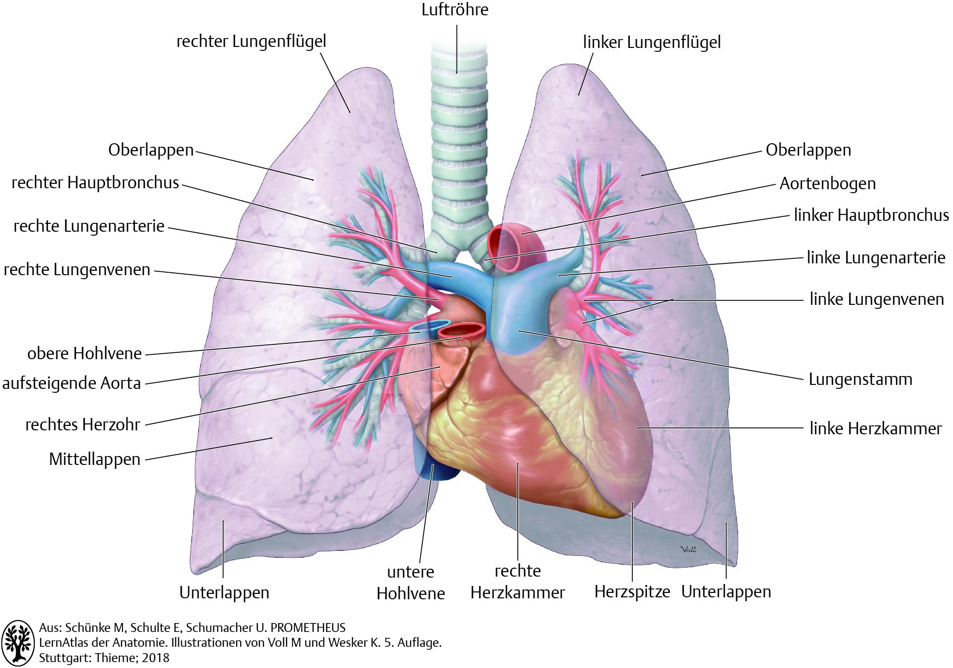 20. Atmungssystem   Pflegepädagogik   Georg Thieme Verlag