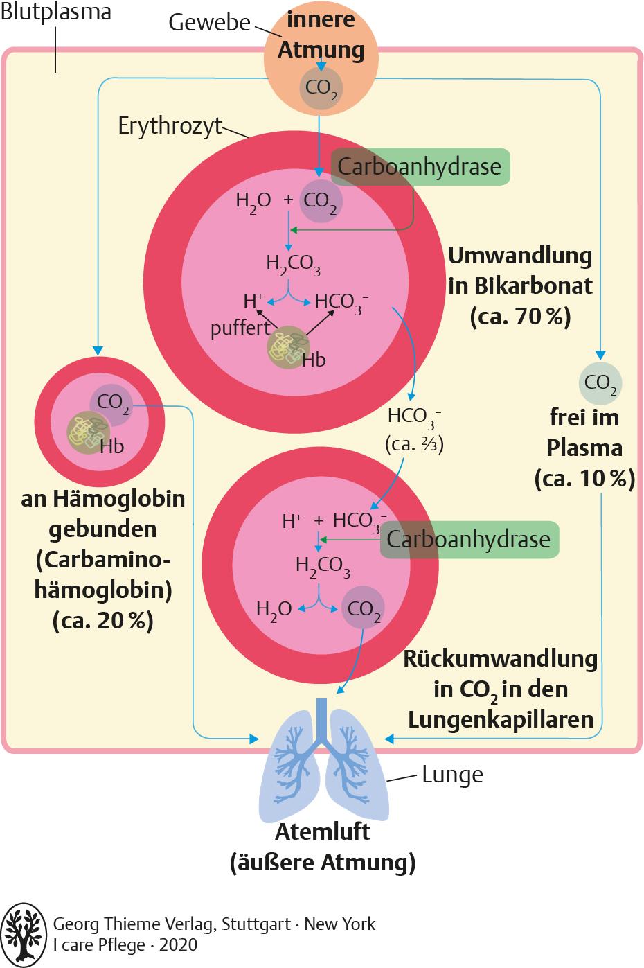 20. Blut und Immunsystem   Pflegepädagogik   Georg Thieme Verlag