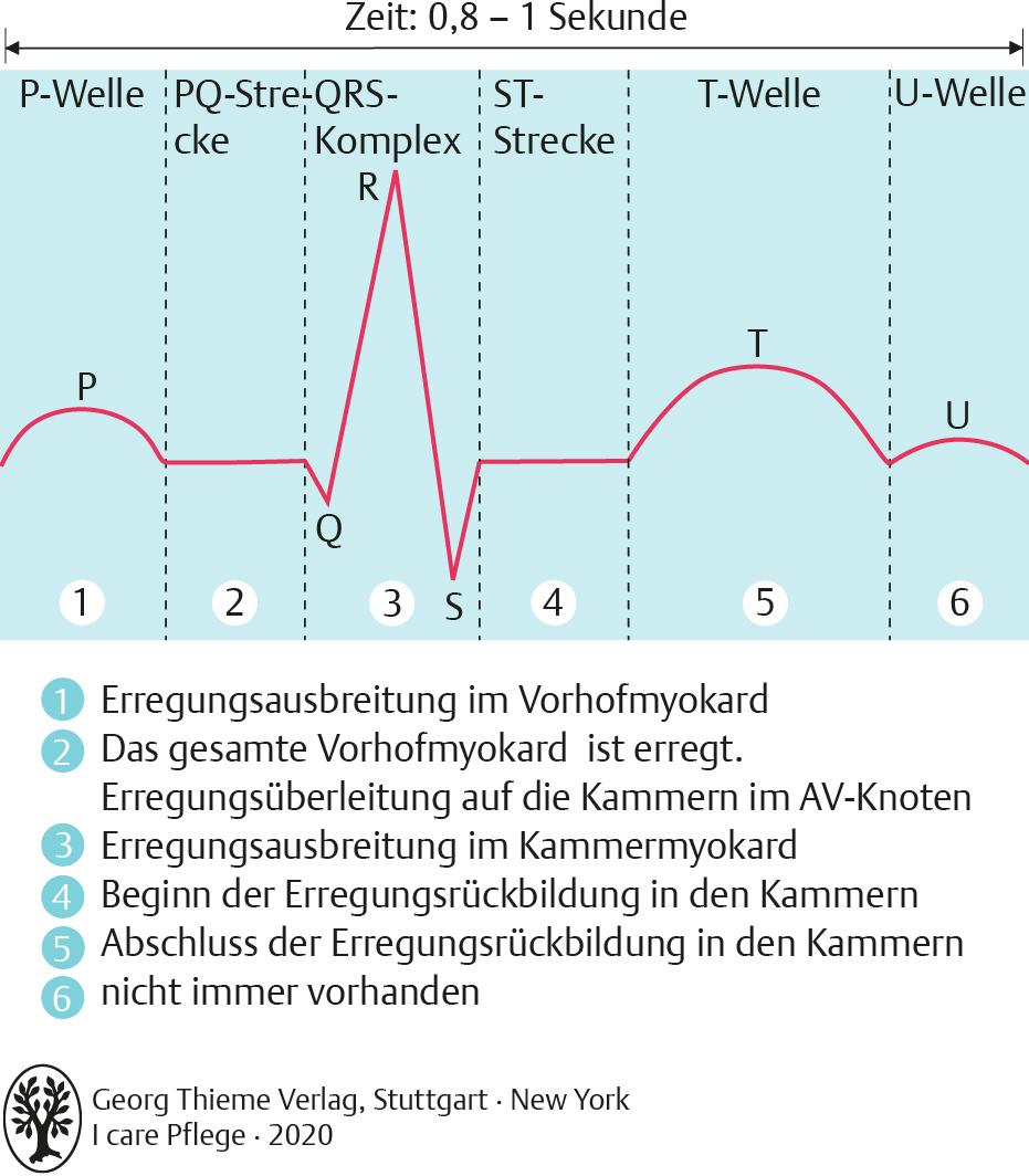 20. Herz   Pflegepädagogik   Georg Thieme Verlag