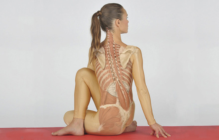 Medical Yoga professional - Physiotherapie - Georg Thieme Verlag