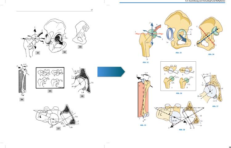 Funktionelle Anatomie der Gelenke - Physiotherapie - Georg Thieme Verlag