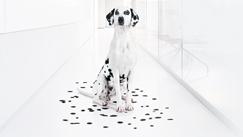 Melaena Blutstuhl Teerstuhl Beim Hund Tiermedizin Enke Verlag