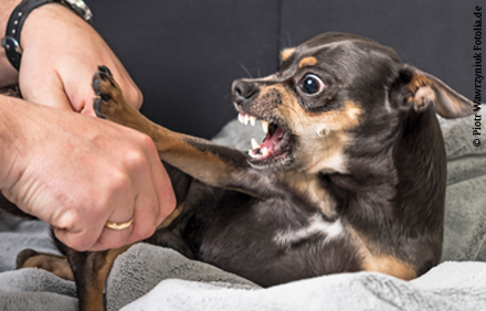 Stressreaktion Und Aggressivität Bei Hunden Tiermedizin Enke Verlag