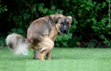 junghund zu dünn