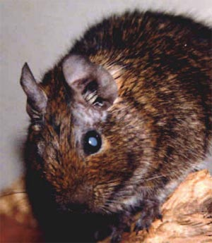 Diabetes mellitus - Enke Verlag - Tiermedizin