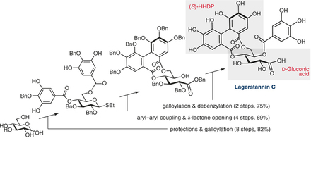 Hidetoshi Yamada describes the completed total synthesis of lagerstannin C.