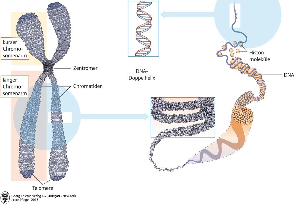 4. Biologie - Pflegepädagogik - Georg Thieme Verlag