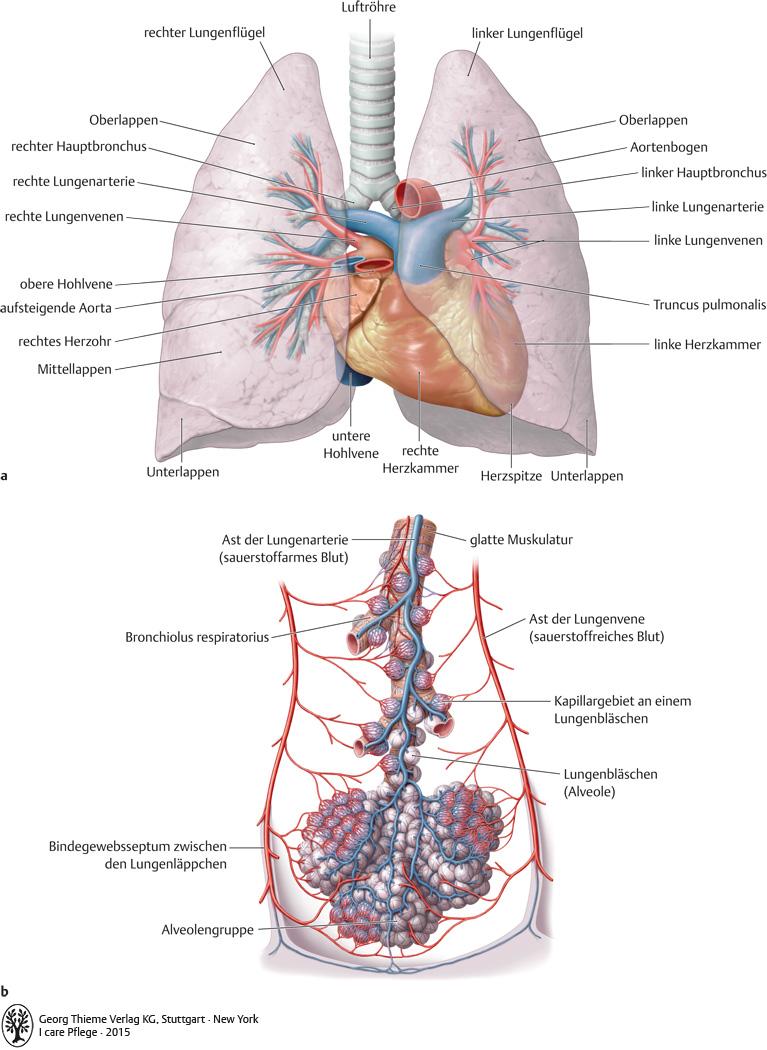 8. Atmungssystem - Pflegepädagogik - Georg Thieme Verlag
