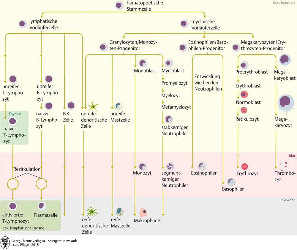 12. Blut und Immunsystem - Pflegepädagogik - Georg Thieme Verlag