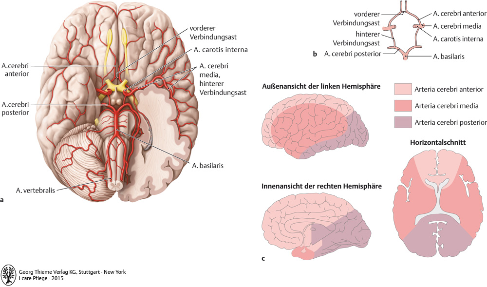 14. Nervensystem - Pflegepädagogik - Georg Thieme Verlag