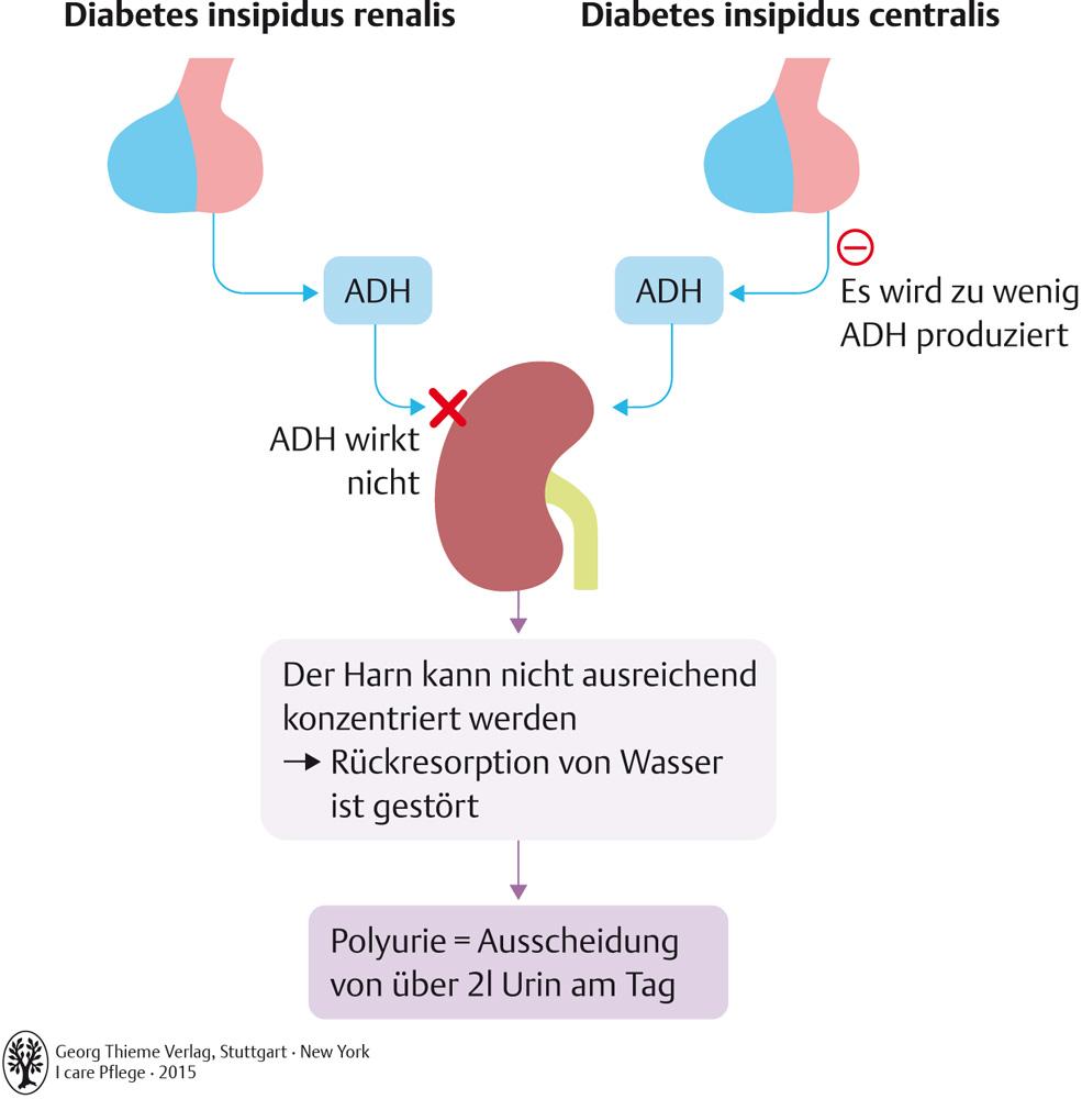 58. Hormonsystems, Stoffwechselstörungen und ernährungsbedingte ...