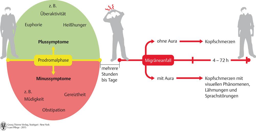 Erfreut Peripheres Nervensystem Arbeitsblatt Galerie ...