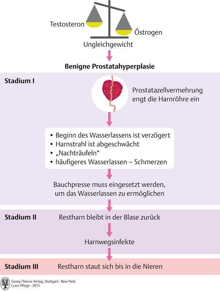 64. Geschlechtsorgane - Pflegepädagogik - Georg Thieme Verlag
