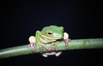 Frosch - Foto: Photodisc