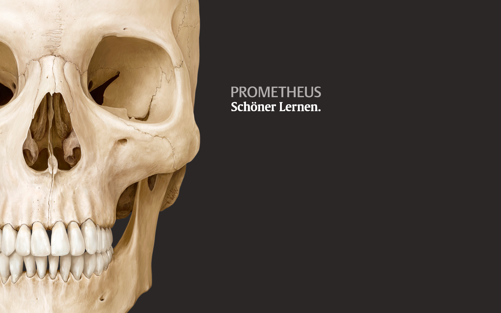 PROMETHEUS Wallpaper - Vorklinik - Via medici